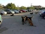piraineto_piazzale_stazione_cani