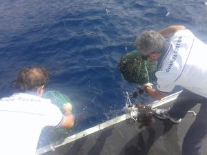 Guardia Costiera Terrasini_ricci di mare rigettati